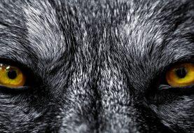 Liskový les: pohádkový svět, kde princezny jsou služky, stařenky vlci, lidé mrznou zaživa a temnota vítá snílky zlou náručí