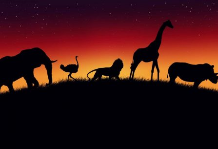 Pomozte Africe a dosaďte na trůn nového krále zvířat v české zábavné karetní hře Kombo Afrika