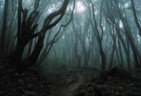 Saeculum: první středověký larp v prokletých lesích tak, jak byste ho zažít nechtěli